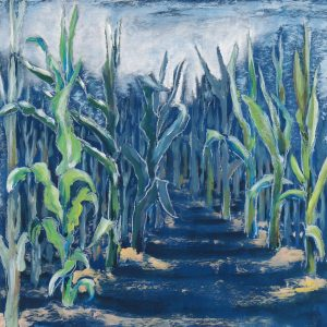 Maispflanzen in Licht und Schatten